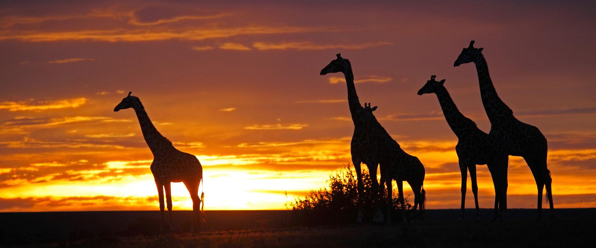 Tanzania Classic Safari