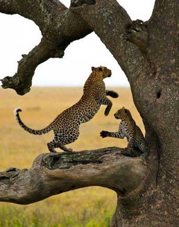 Safari Faq's