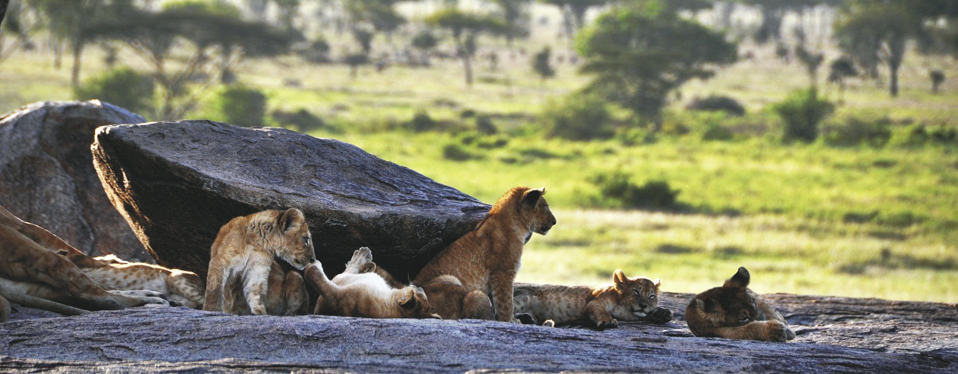 Tailor-Made Safari Experiences